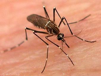 dedetizacao-mosquitos